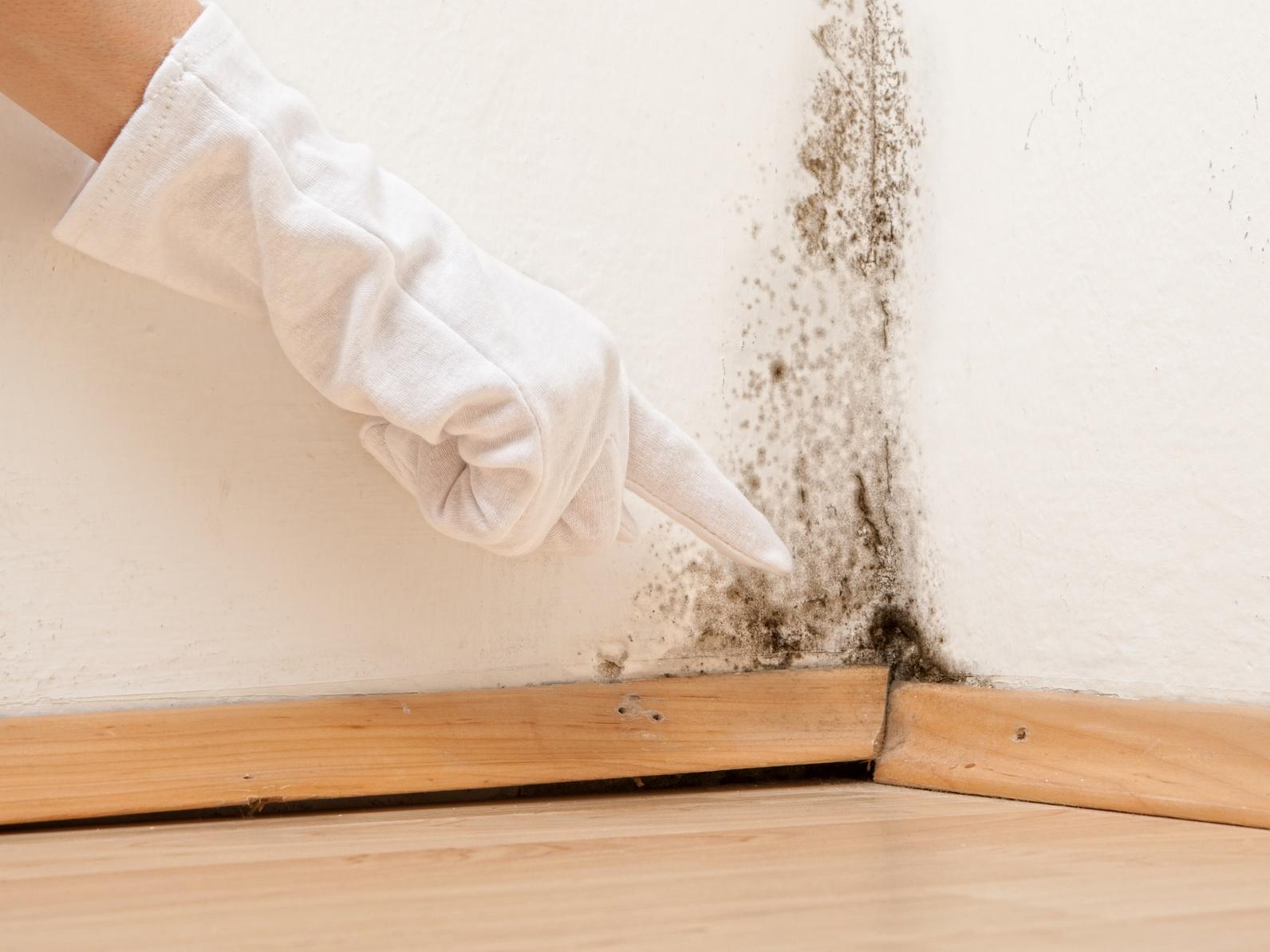Les dangers de l'humidité sur votre logement